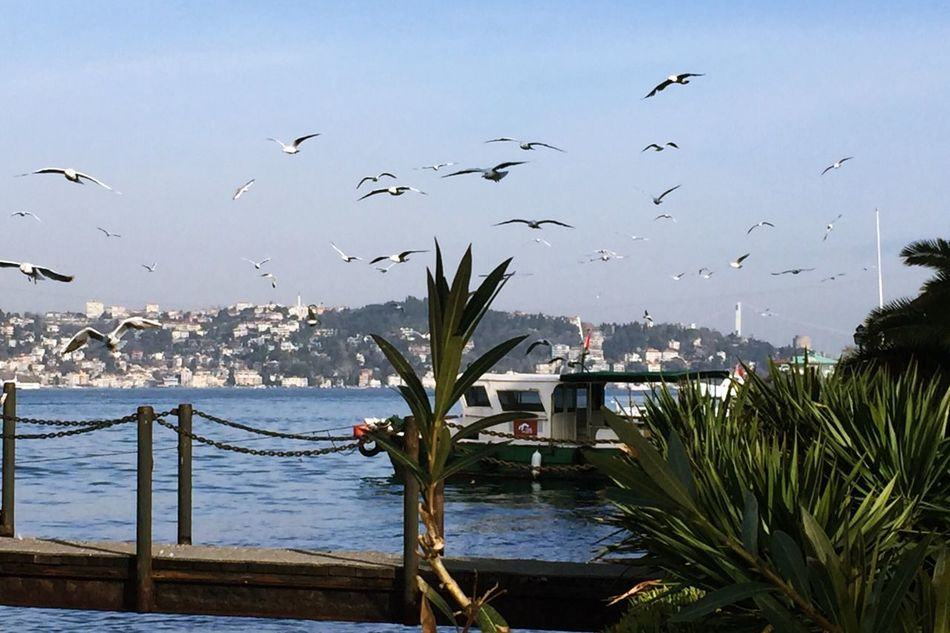 Sea Flying Flock Of Birds Nature