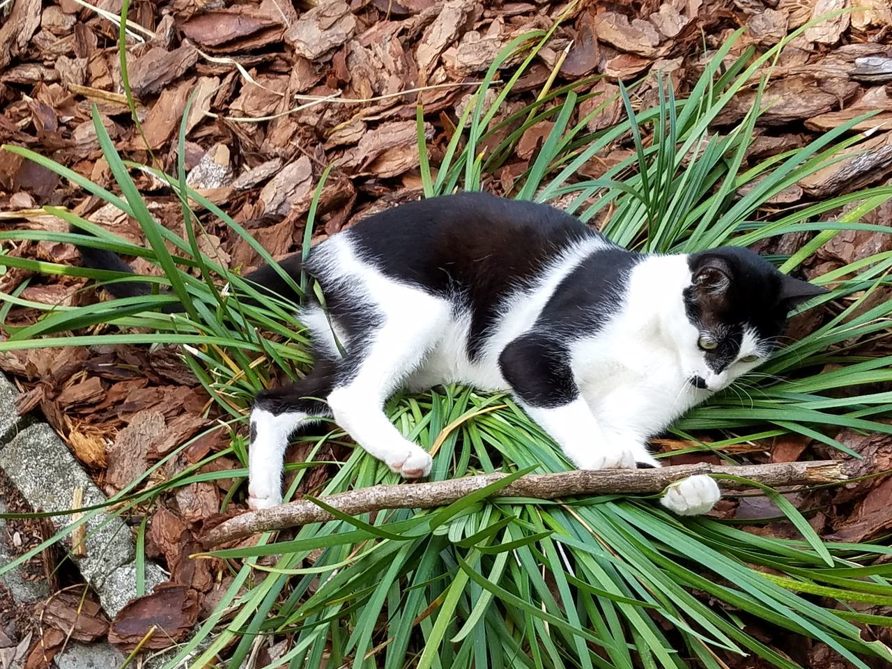 Cat Stick Playful Domestic Animals One Animal Pets Outdoors