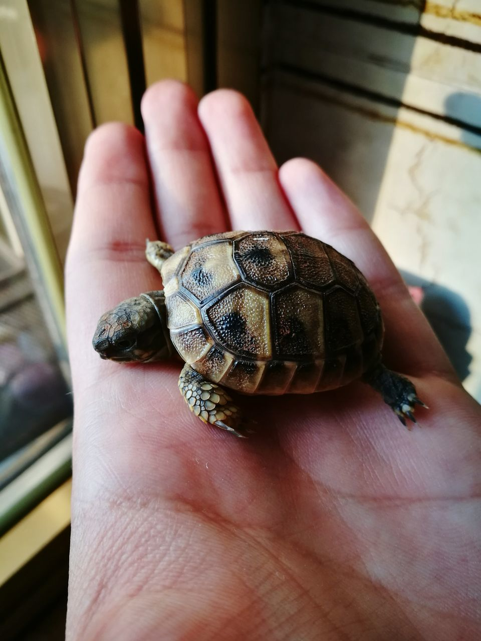 human hand, human body part, one animal, animal themes, one person, human finger, real people, animals in the wild, wildlife, unrecognizable person, turtle, animal wildlife, day, holding, close-up, focus on foreground, outdoors, leisure activity, reptile, sea turtle, lifestyles, palm, fragility, tortoise, nature, tortoise shell
