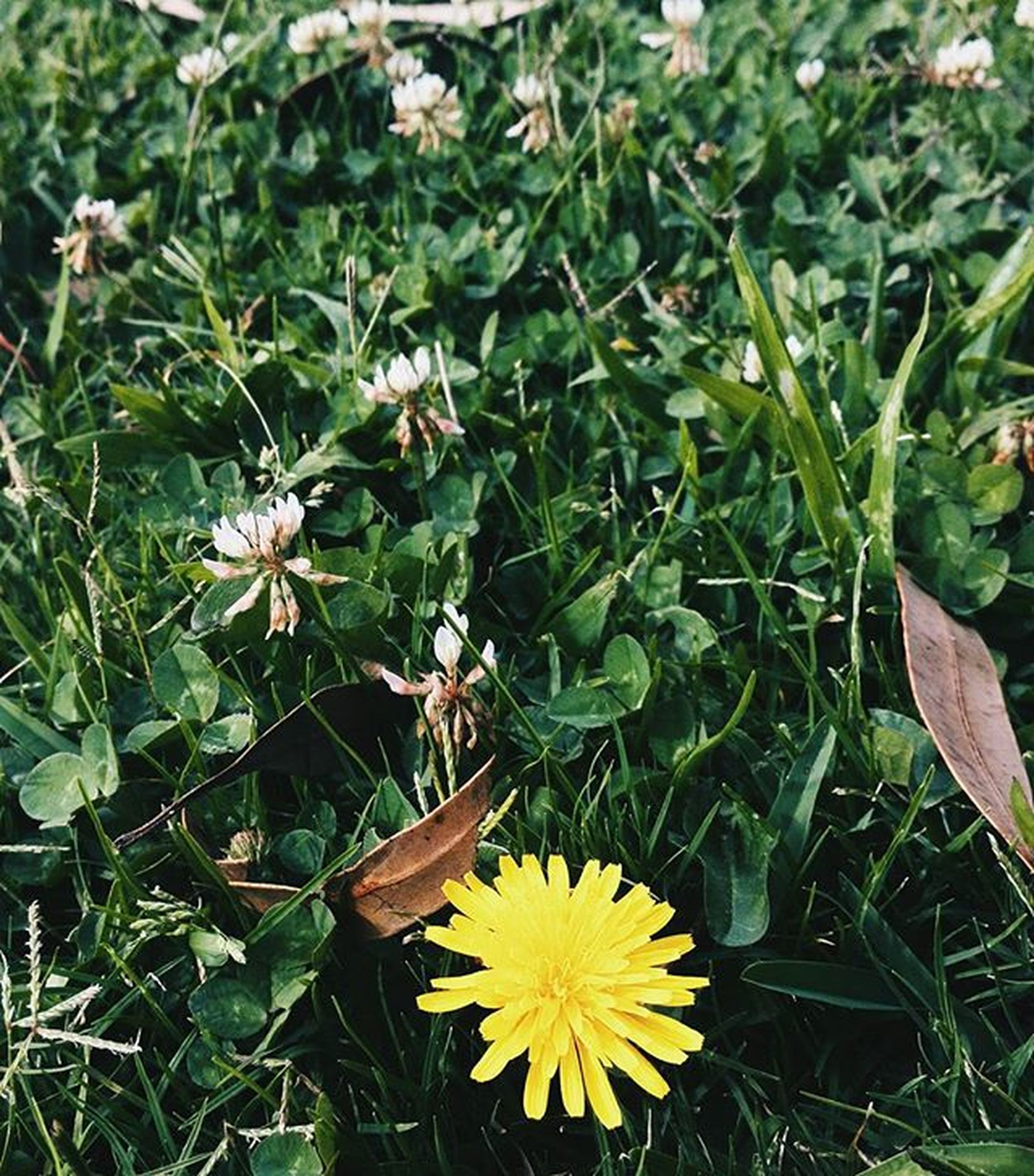 flower, petal, yellow, fragility, freshness, growth, high angle view, plant, flower head, grass, beauty in nature, field, nature, blooming, leaf, green color, in bloom, day, daisy, outdoors