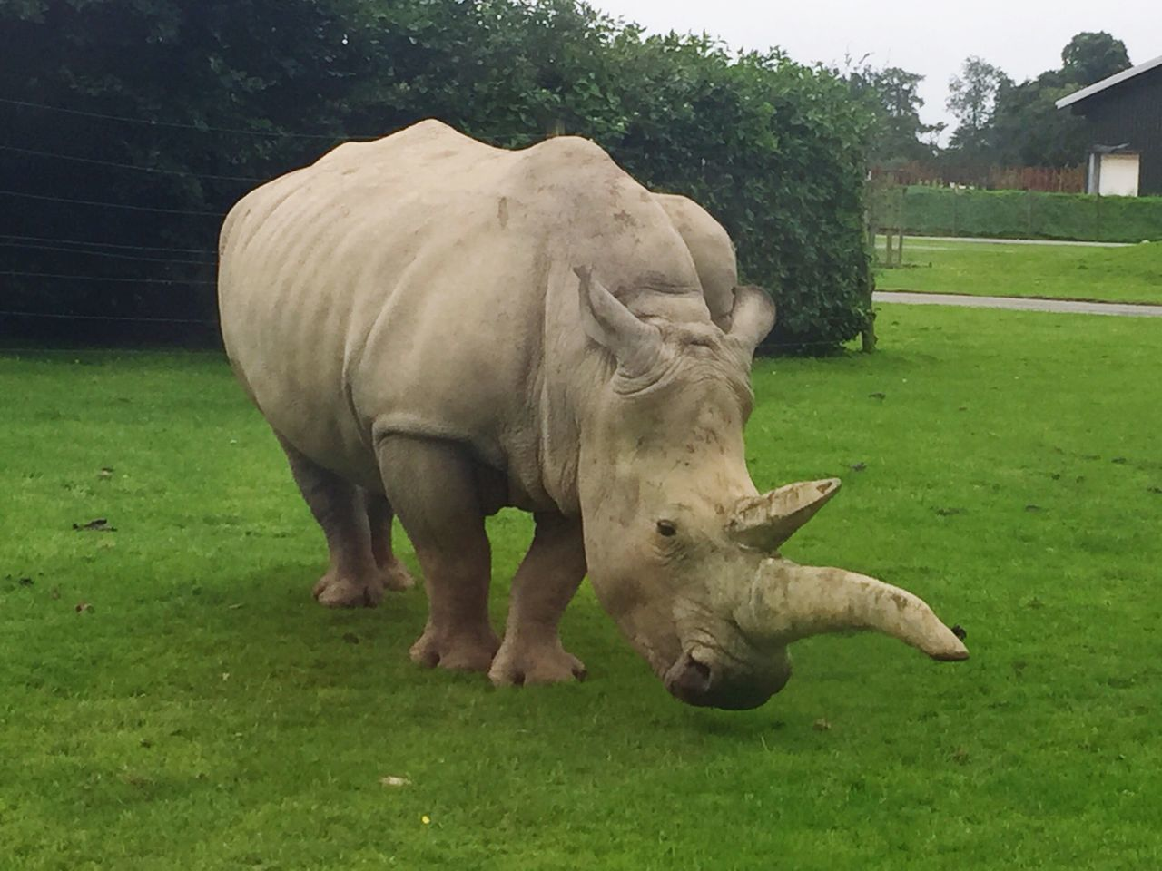 WhiteRhino RhinoHorn Safaripark Beauty In Nature Wild