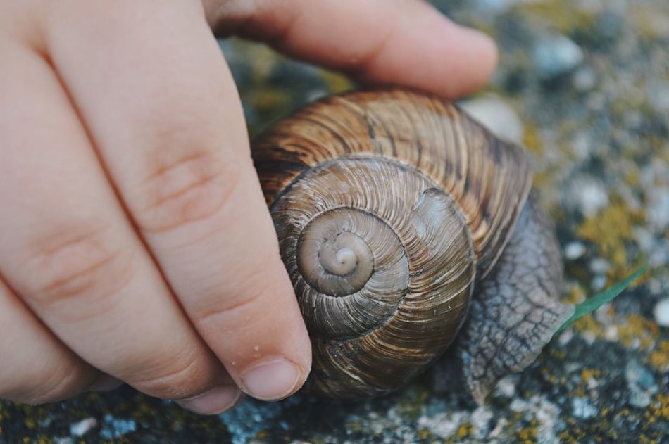 Childhood discovery... Human Hand Close-up Human Finger Human Body Part Snail One Animal Unrecognizable Person Gastropod Animal Themes Fragility Animals In The Wild Nature Shell Macro Nature Macro City Life Details Of My Life Fresh On Eyeem  Found On The Roll Made In Romania My Favorite Photo Vscocam Education Childhood Adapted To The City Art Is Everywhere