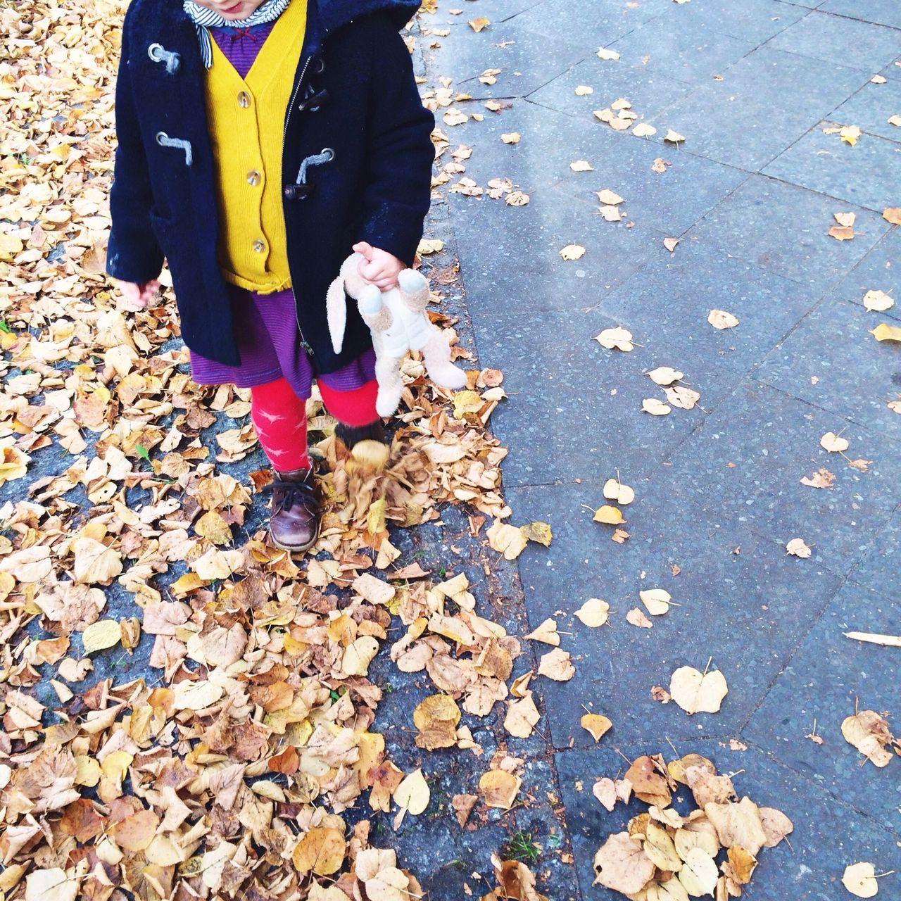 Autumn Colours Of Autumn Autumn Leaves Fall Leaves