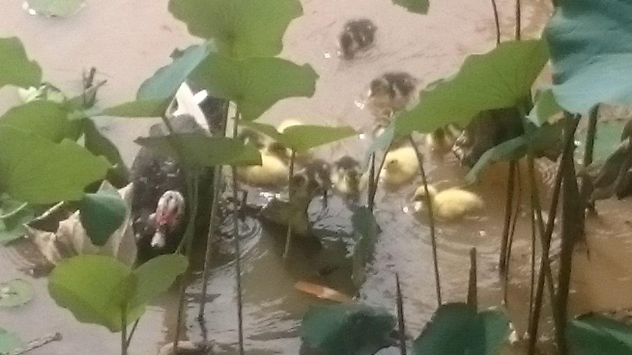 Parquedasaguas Natureza 🐦🌳 Campinas, São Paulo, Brasil XperiaZ1 Semfiltro Ducks