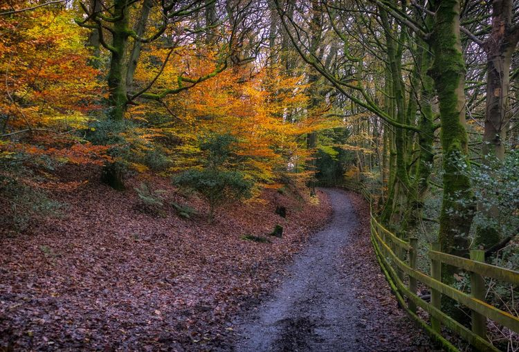 ~Late Autumn Walks~ Still beautiful autumn colours to be found. This taken earlier today in Lancashire Tree Autumn Nature The Way Forward Beauty In Nature Outdoors Tranquility Scenics Streamzoofamily Taking Photos Landscape_photography Tranquil Scene Colourful Landscape_Collection Landscape LumixG80 WoodLand Autumn Autumn Colors Foliage Rural Scene Single Lane Road Colours Tree Trunk Autumn Leaves