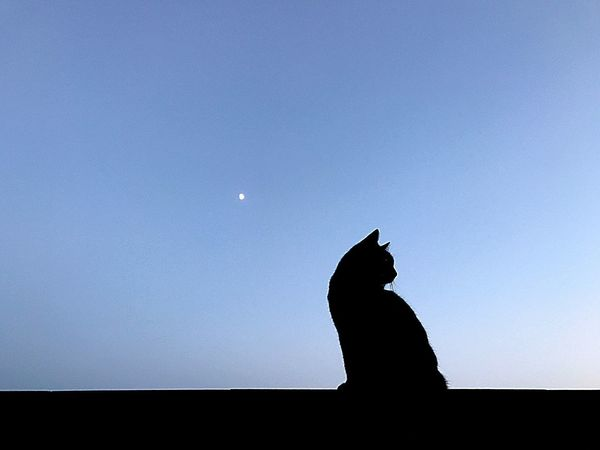 Moon Full Moon Silhouette One Animal Copy Space Animal Themes Low Angle View Moonlight Pets Domestic Cat Nature Sky Outdoors Night Mammal Clear Sky Domestic Animals Astronomy