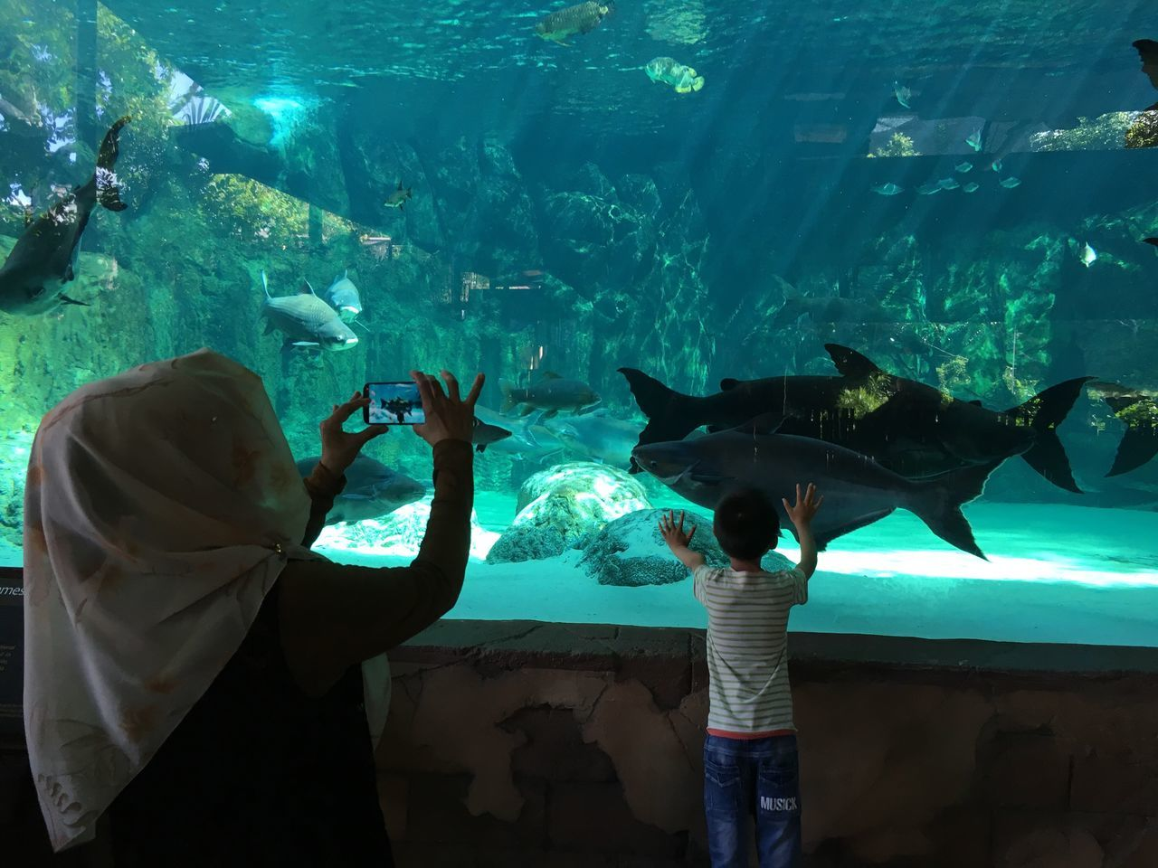 real people, fish, one animal, water, animals in captivity, pets, aquarium, sea life, leisure activity, swimming, standing, one person, mammal, indoors, nature, lifestyles, animals in the wild, domestic animals, sea, men, day