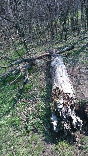 Trees Hanging Out Tree Trunk TreePorn Tree Tree_collection  Tree And Sky Trees And Sky Treescollection Tree Porn Wood Wood - Material Wald Baum 🌳🌲 Baumstamm Baum Baumstumpf Baum, Landschaft, Weite Baumstämme Baum & Zeit Taking Photos