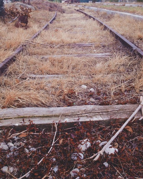 Train Train Station Railway Railroad Rails VSCO Vanishing Point Traveling Travel From My Point Of View