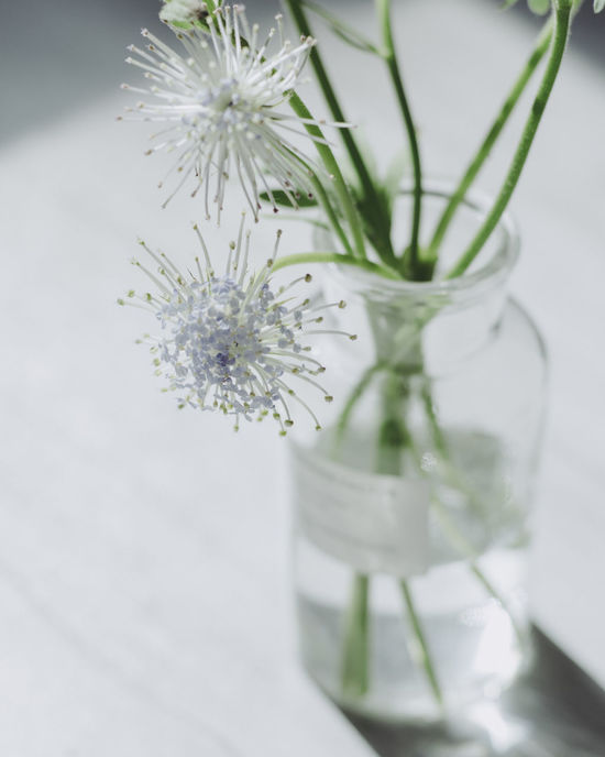 Beauty In Nature Close-up Day Drinking Glass Flower Flower Head Fragility Freshness Growth Indoors  Jar Nature No People Plant Selective Focus Table Vase White Color