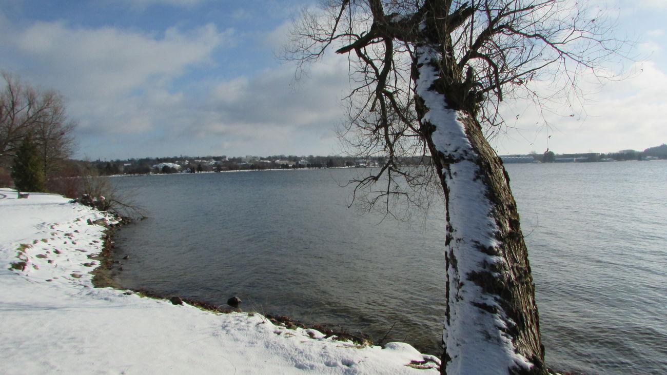 Taking Photos Around The Lake Touches Of Snow Leaning Tree Beautiful Day Enjoying Life Lake Cadillac Pure Michigan