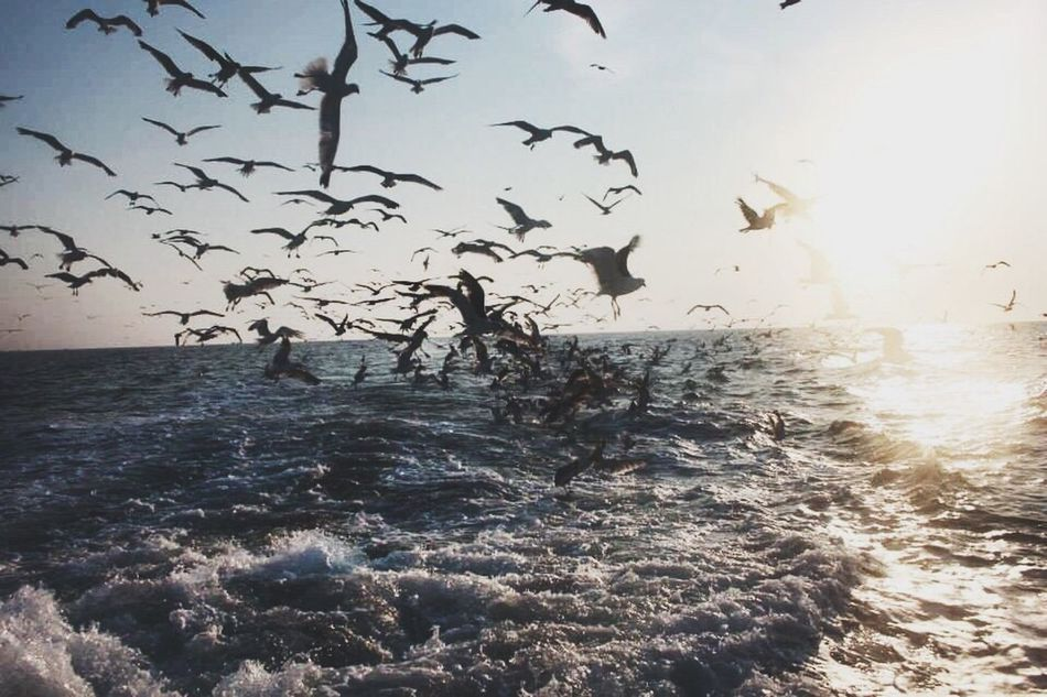 Seagulls invasion! Sea Water Nature Horizon Over Water Beauty In Nature No People Large Group Of Animals Sky Outdoors Flock Of Birds Bird Sunset Wave Animals In The Wild Fishing Fishing Boat Fisherman Fishermen's Life Fishboat Adriatic Sea Sea Life Seagulls SEAGULL IN FLIGHT Clear Sky Flying