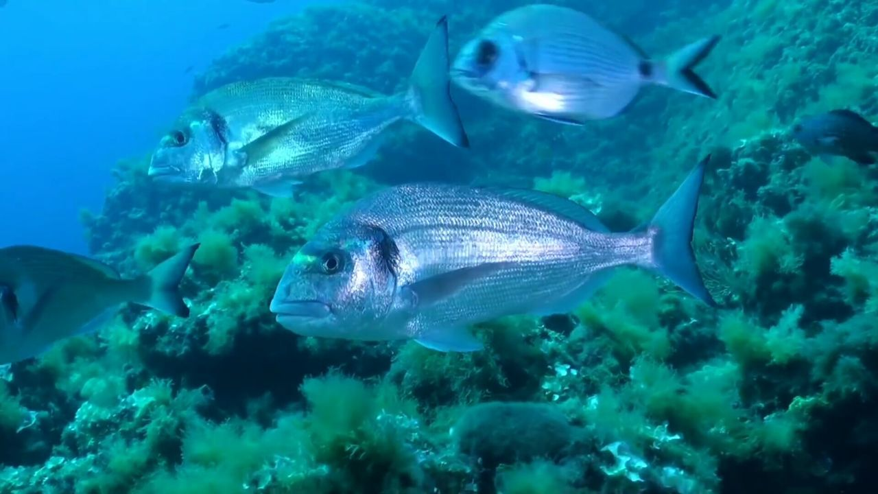 Animal Wildlife Beautiful Nature Beauty In Nature Submarine World Seascape Fish Animal Themes UnderSea Underwater Sea Life Underwater Diving Nature No People Biology Sealife
