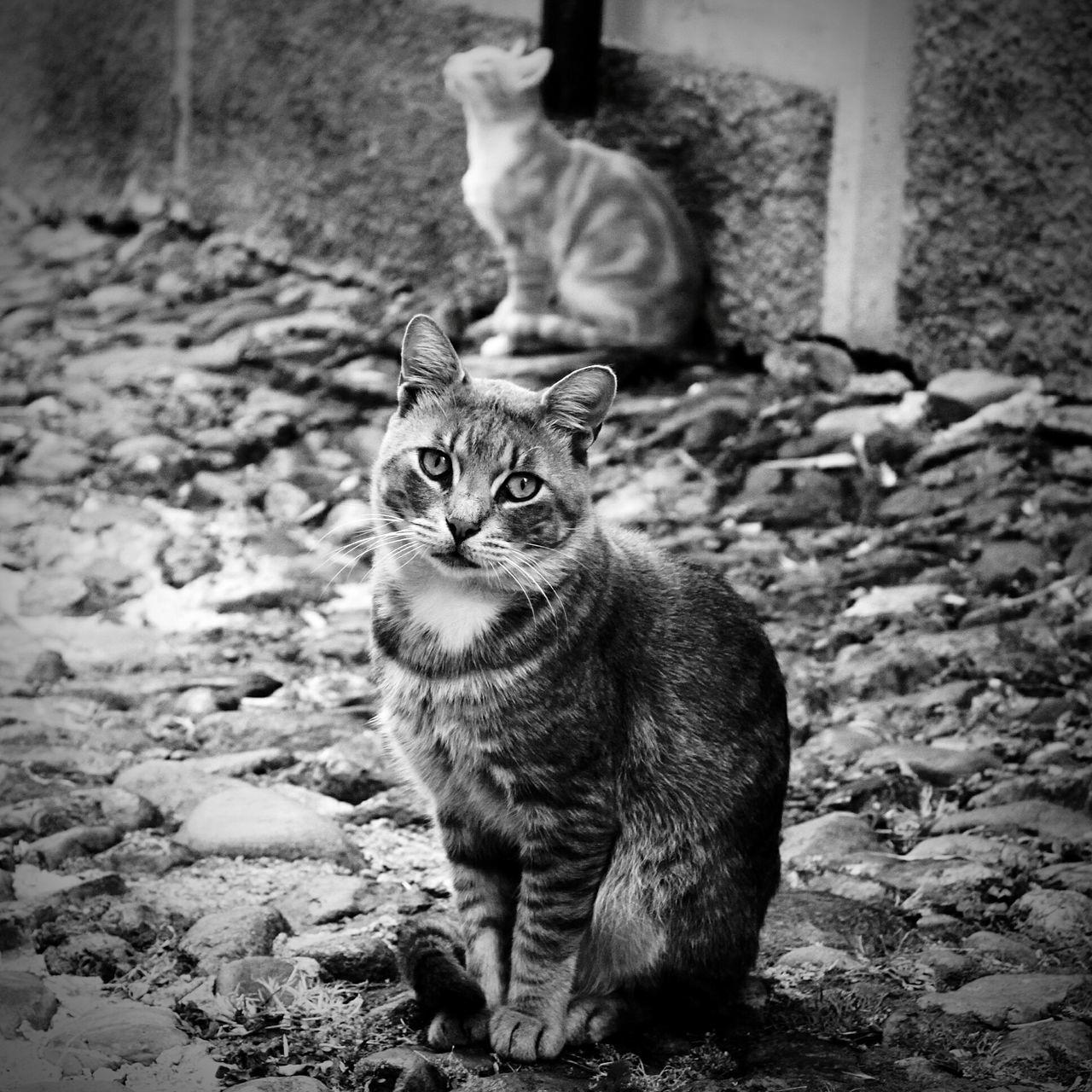 Beautiful stock photos of katzen, Animal Themes, Cat, Day, Domestic Animals
