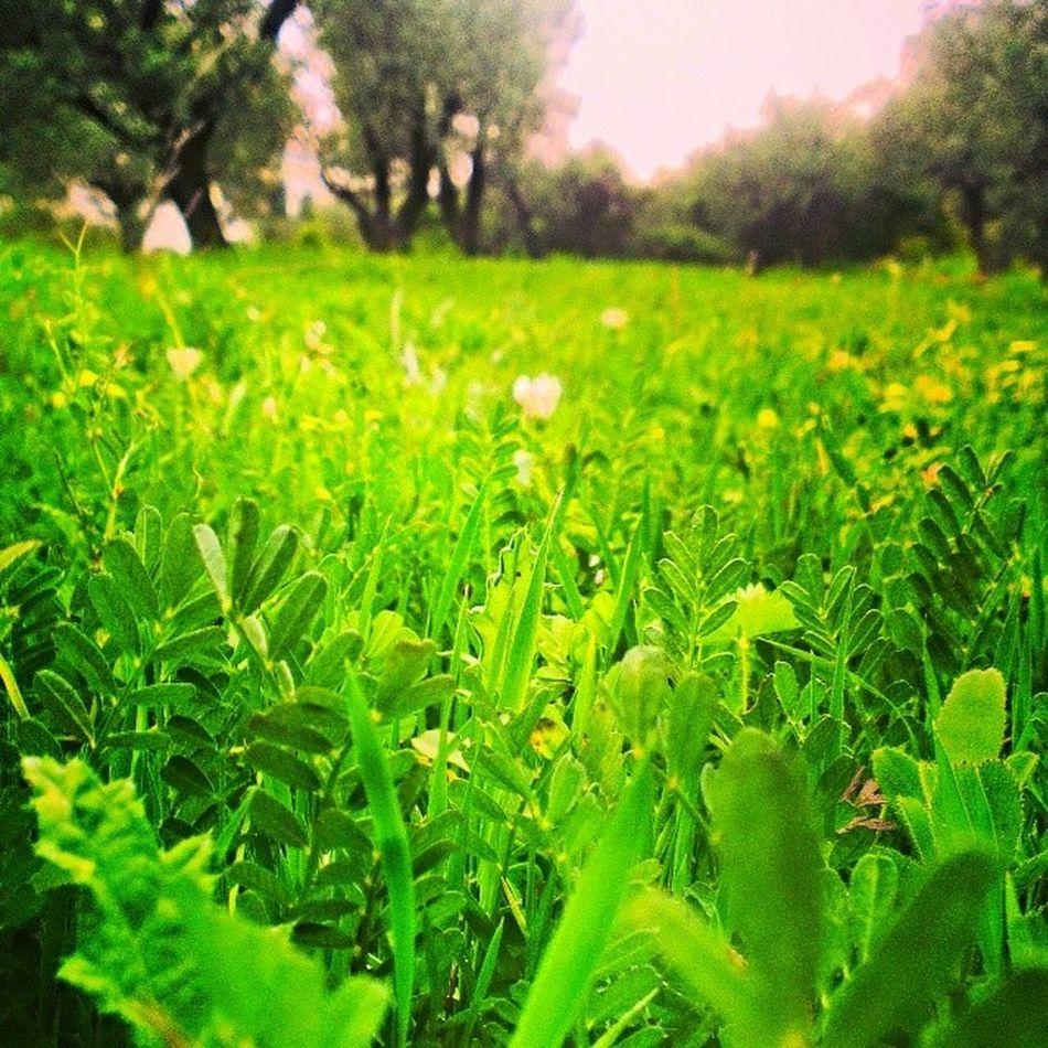 Bjadeh Walk Green Place