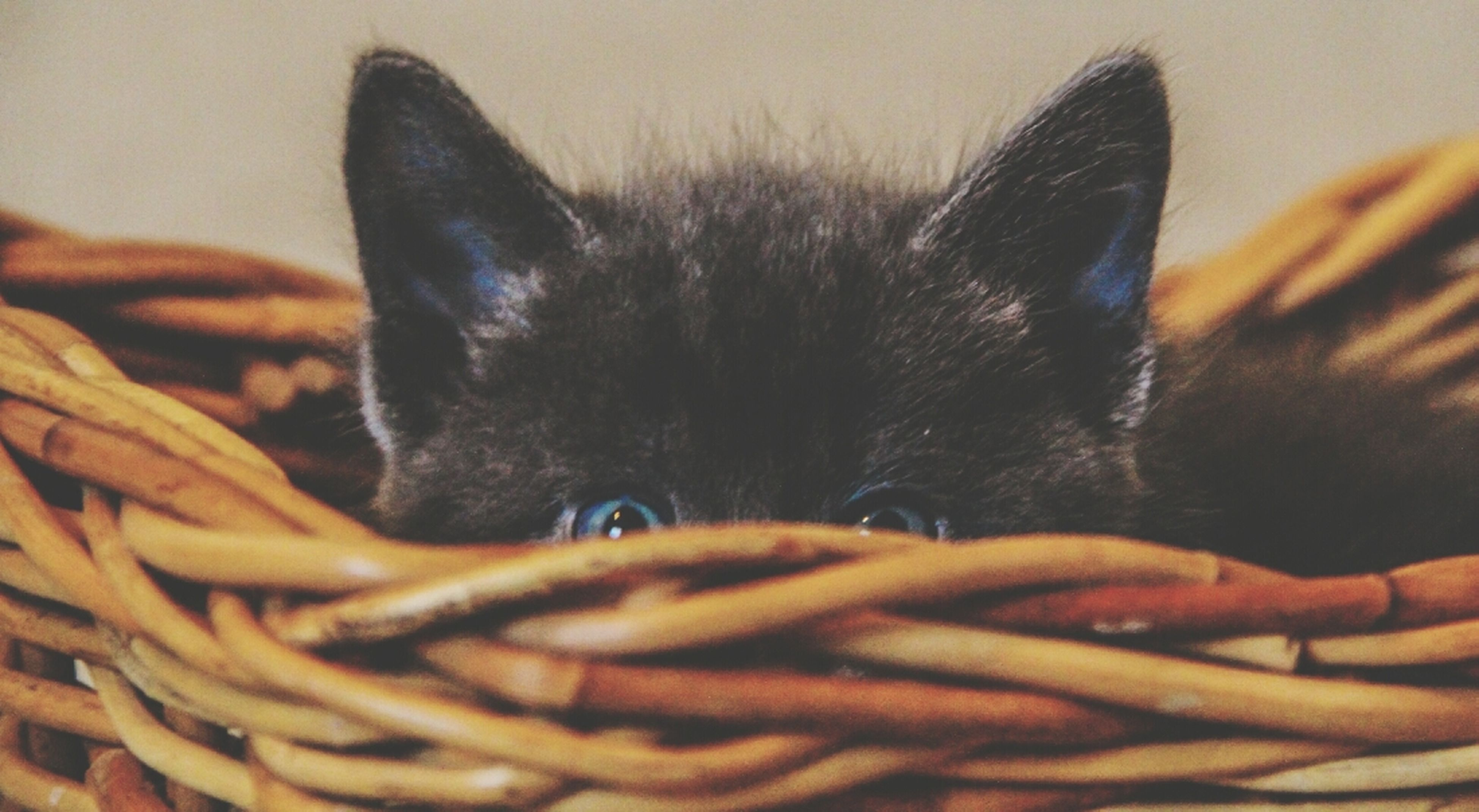 indoors, animal themes, one animal, domestic animals, close-up, pets, mammal, domestic cat, animal body part, relaxation, part of, focus on foreground, bed, animal head, cat, resting, home interior, no people, whisker, black color