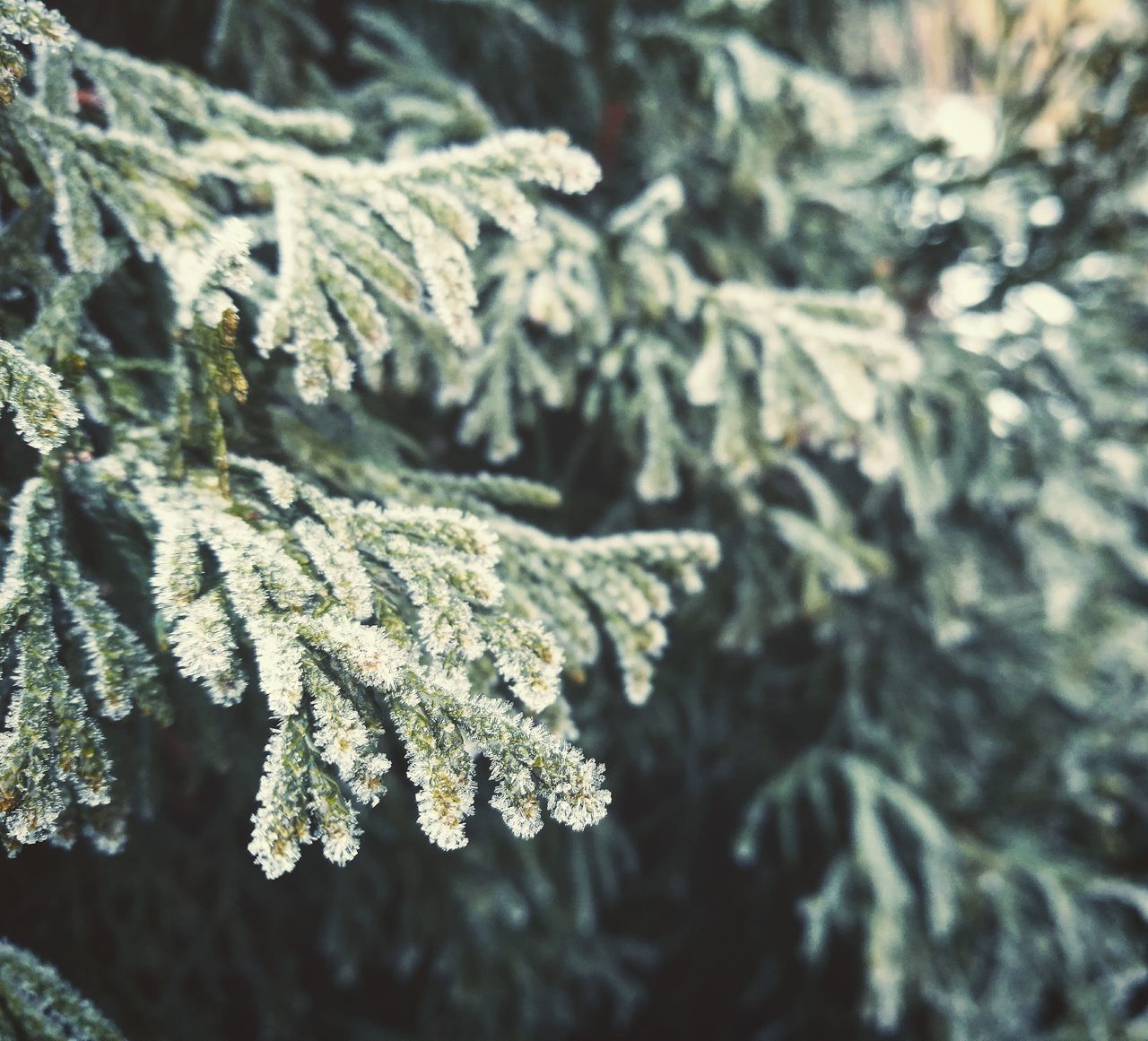 Winter Cold Temperature Nature Snow Close-up Beauty In Nature Tree Icy Crystalized