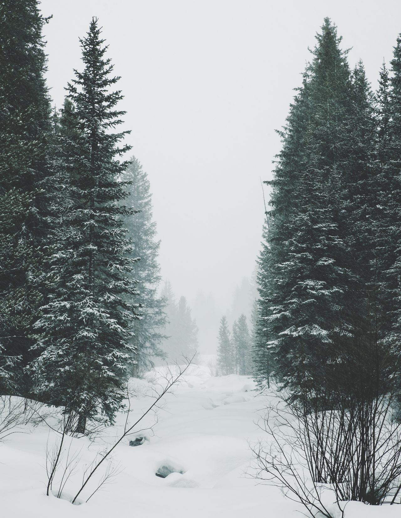Snow Tree Cold Temperature Winter Nature Weather Beauty In Nature Forest Tranquil Scene Landscape Clear Sky Scenics Frozen Outdoors Tranquility No People Day Snowing Cold Sky