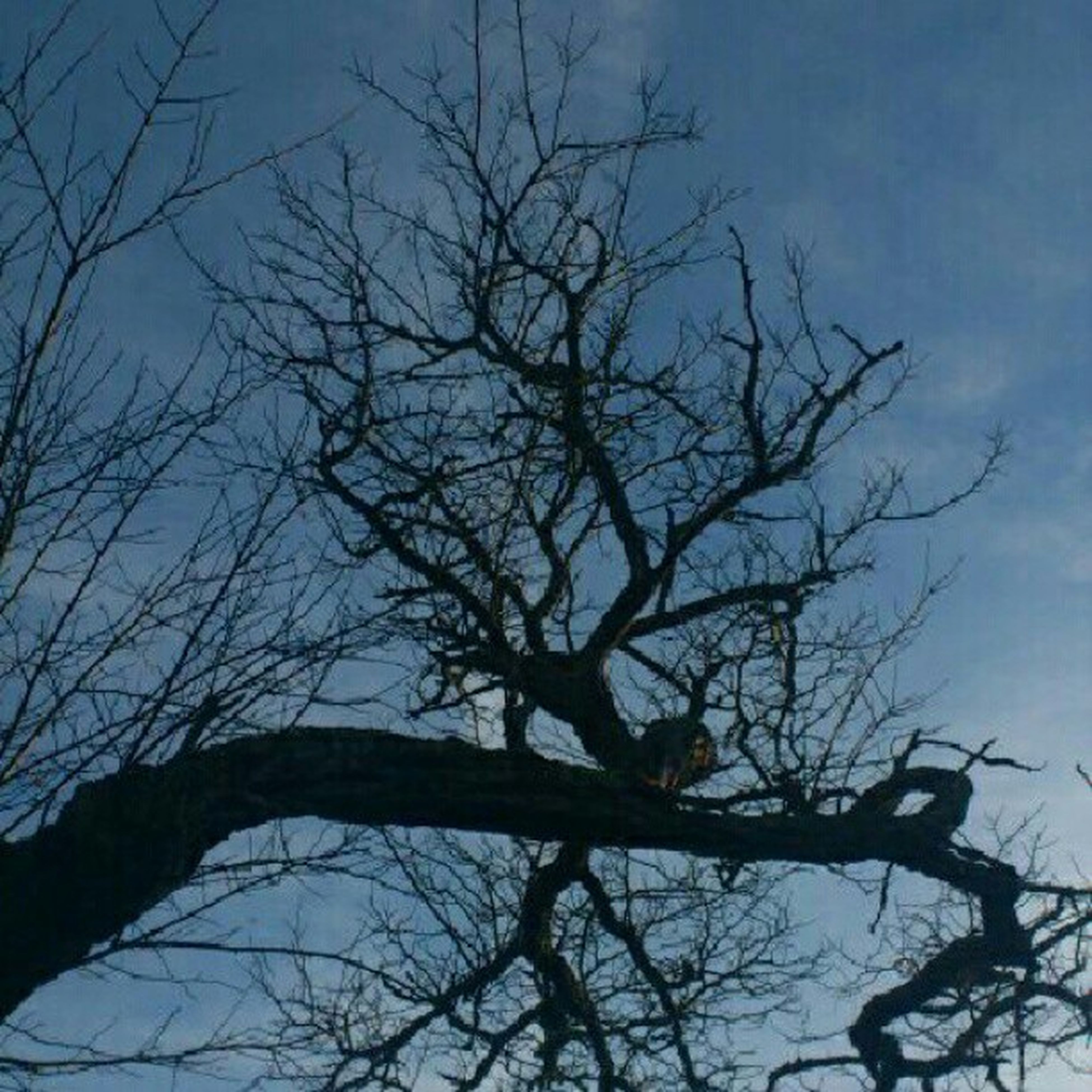 bare tree, branch, low angle view, tree, sky, silhouette, tranquility, nature, blue, beauty in nature, scenics, outdoors, tree trunk, tranquil scene, no people, clear sky, day, cloud - sky, dusk, cloud