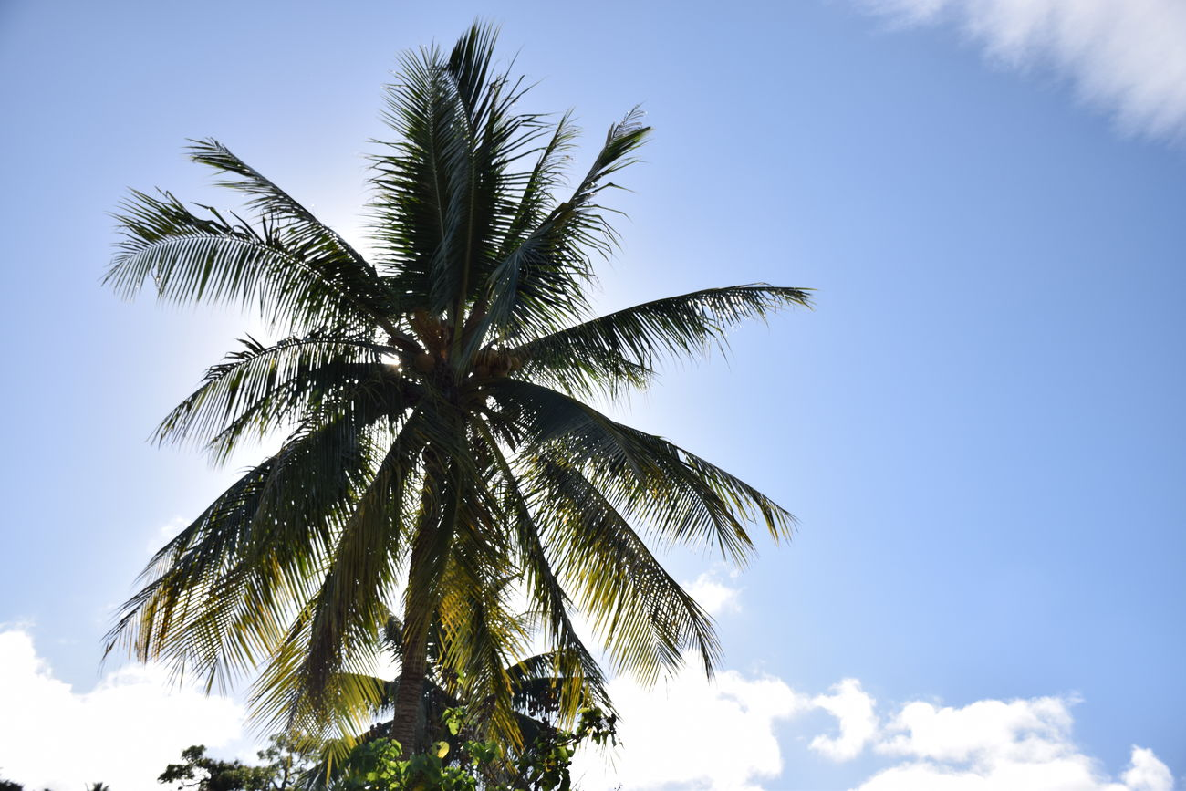 Clouds Nature NIKON D5300 Palm Trees Sun Tahiti