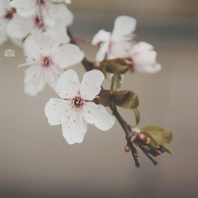 Spring Flower Beautiful Narime