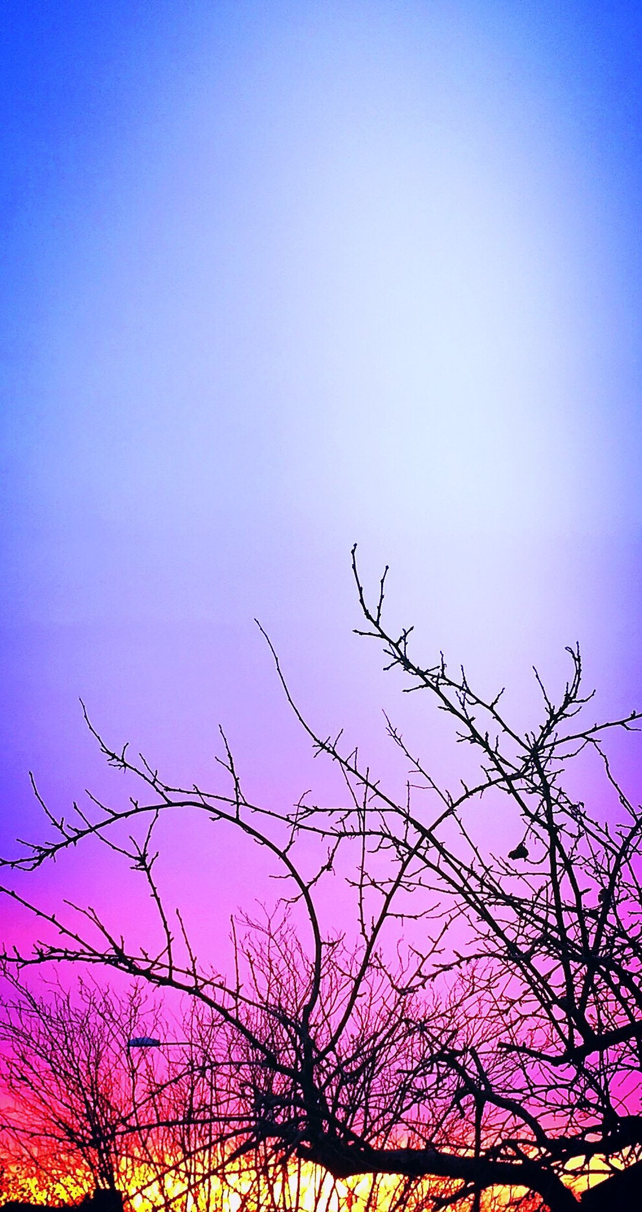 Clear Sky Nature Bare Tree Low Angle View Silhouette Beauty In Nature Sunset Beautiful Light