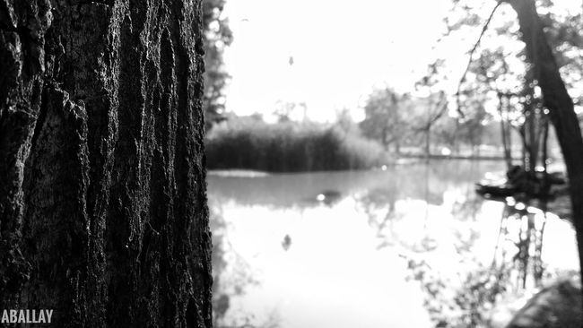 Focus Object Water Tree Reflection Lake Nature Sky Outdoors No People Day Beauty In Nature Close-up Blac&white  Monochrome Photography