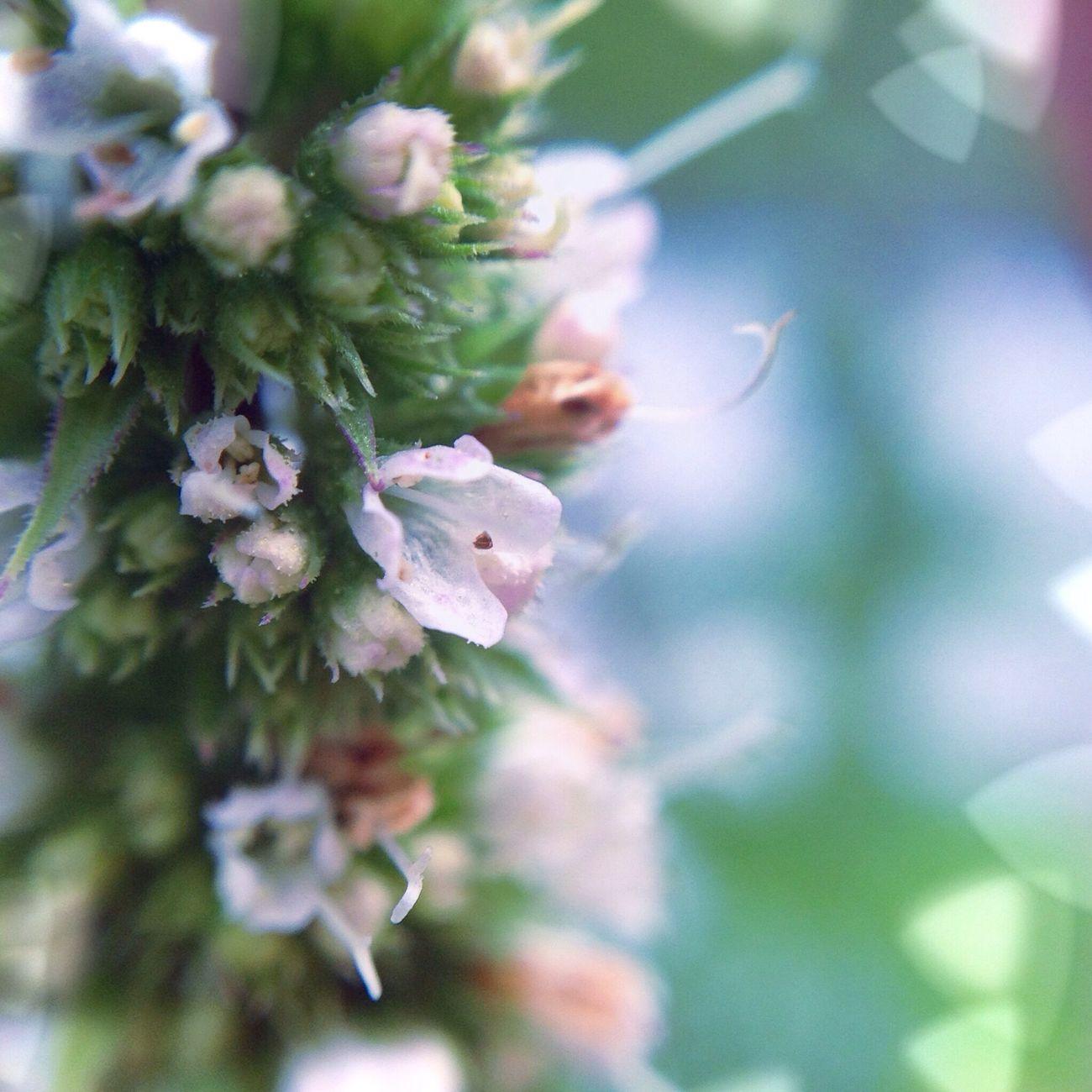 Nature Flowers Flower Macro