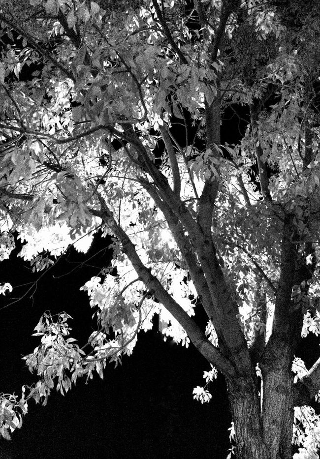 Black And White Tree_collection