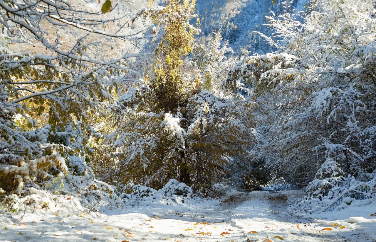 Snowy Backroads Backroads Beauty In Nature Bolu..TURKEY Cold Temperature Leaves Mountains Nature Outdoors Roads Snow Tranquility Tree Treescape Winter Winter Wintertime Winterwonderland
