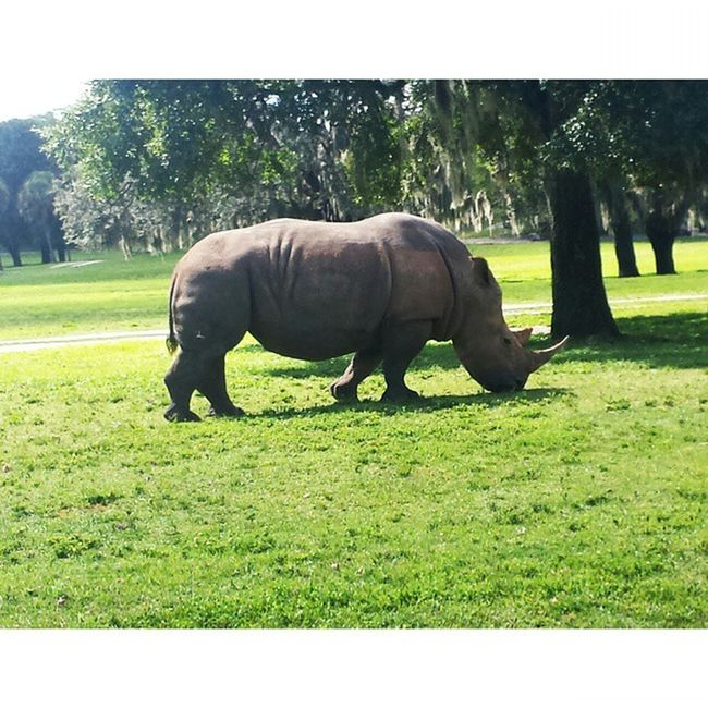 Tookin and edited by ME WhiteRhino Rhino Buschgardens Animal Photography Photos
