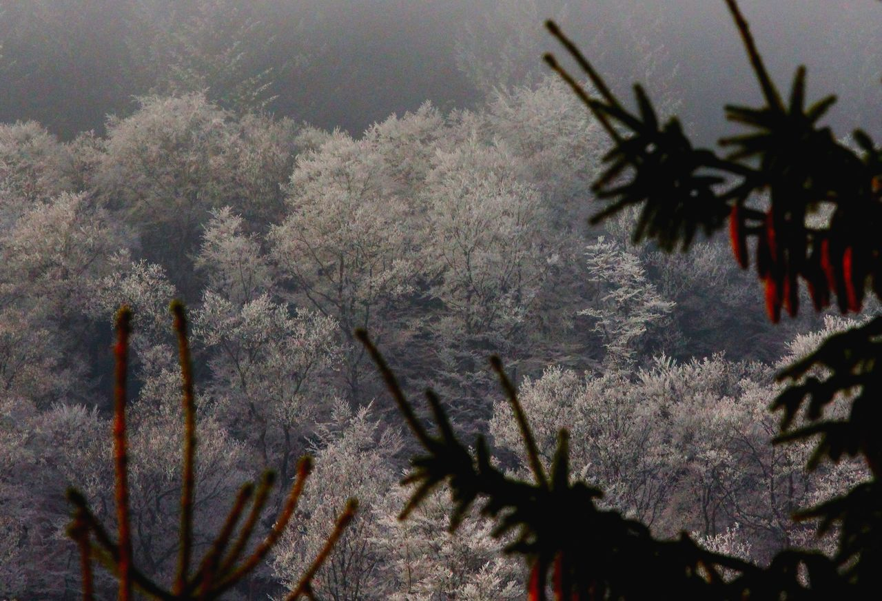 Beauty In Nature Buche Cold Dezember Fichte Germany Growth Hessen Hinterland Nature No People Outdoors Plant Reif Tree Wald Winter Wood