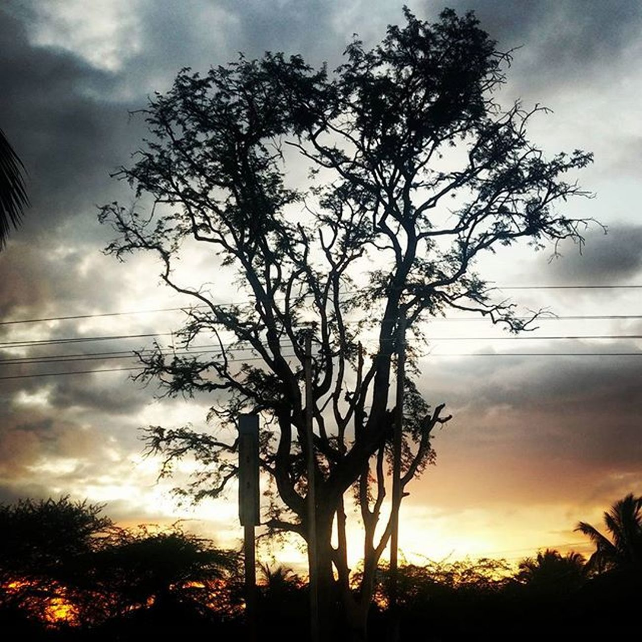 A black tree..!! Nature Is Awesome And Made Of Awesomeness Black Clouds Trees Branches Orange Sky Photography On Earth Naturalclick Like Love Live Green