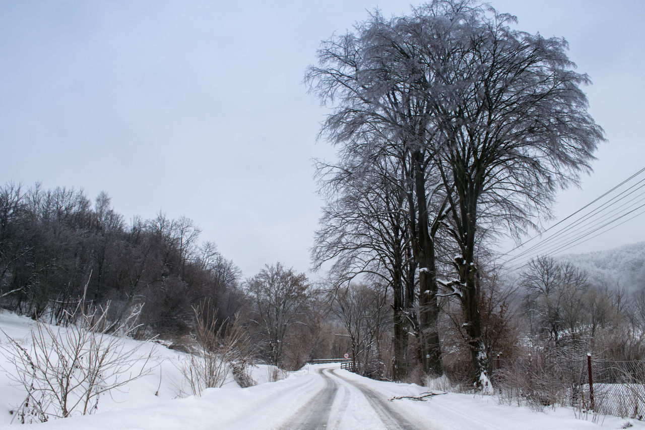 snow, winter, cold temperature, tree, bare tree, nature, weather, tranquility, road, beauty in nature, day, branch, landscape, outdoors, no people, scenics, sky