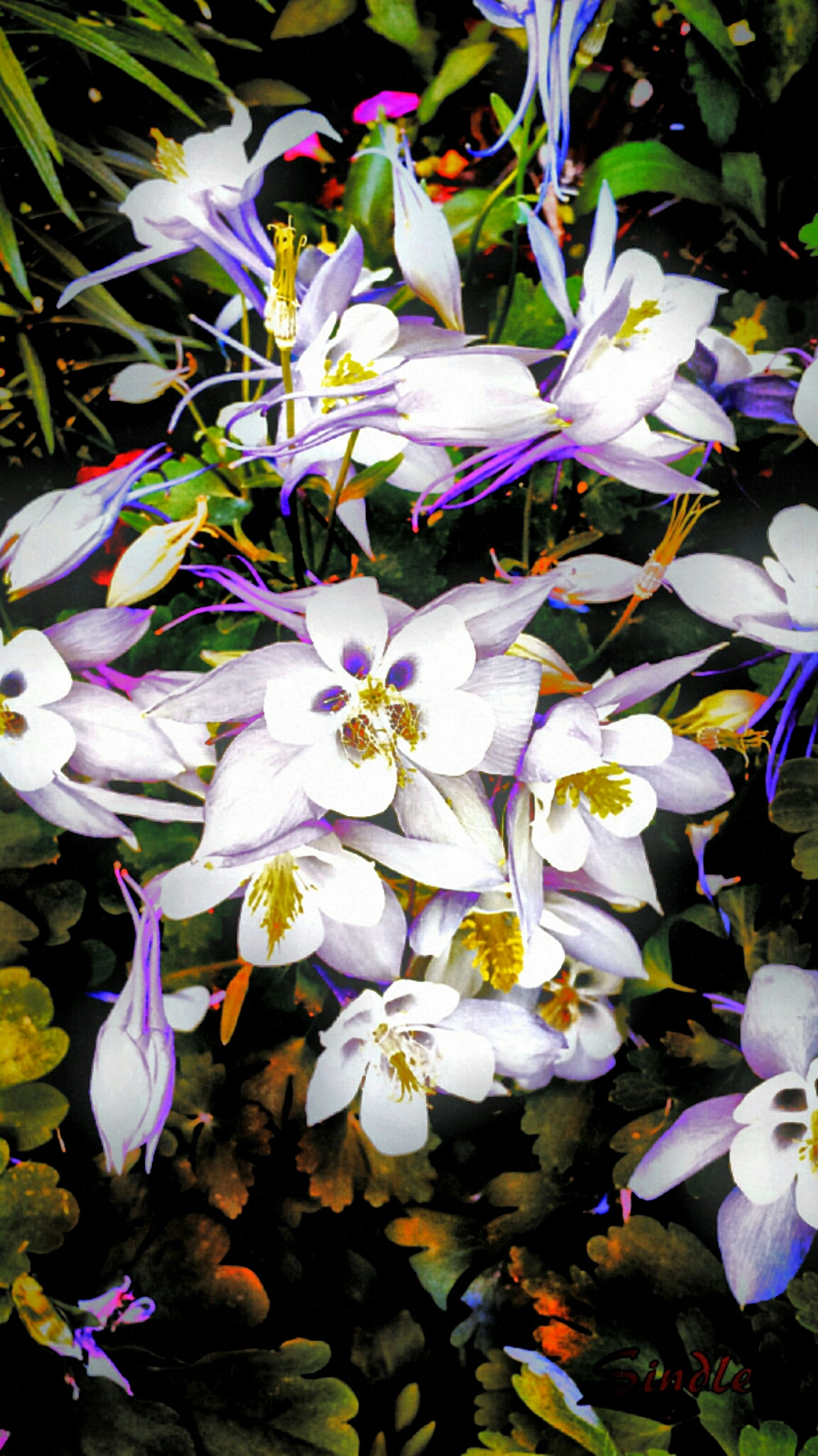 flower, petal, freshness, fragility, growth, purple, beauty in nature, flower head, blooming, nature, plant, leaf, blue, in bloom, close-up, high angle view, blossom, white color, park - man made space, outdoors