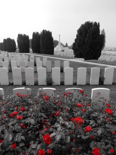 Headstones In A Row Headstones Headstone Stone Flower Outdoors Red Tranquility Formal Garden No People Tranquil Scene Memories Red Remembrance Rememberance Remember Poppy Flowers Poppy Calm Scenics