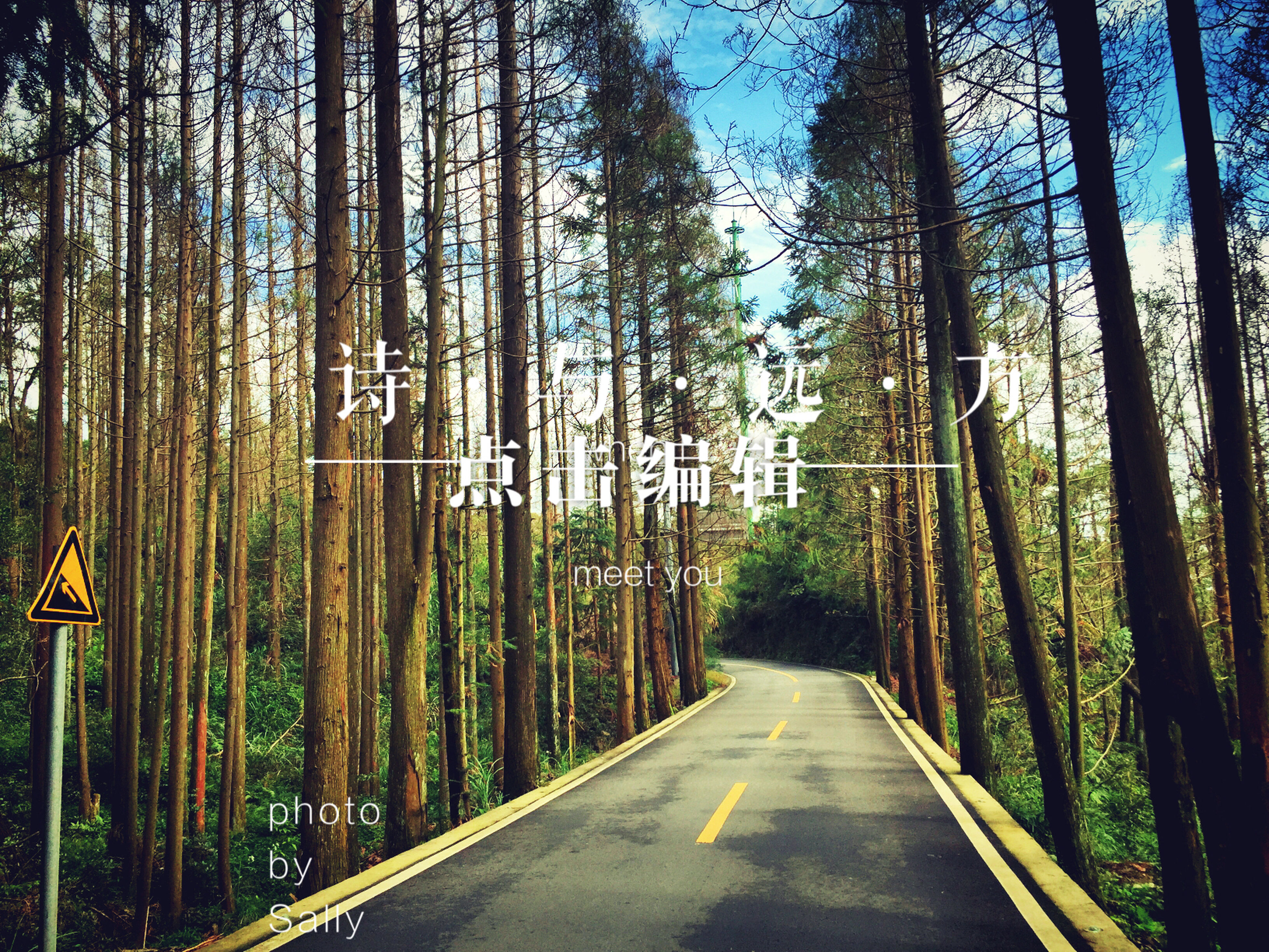 the way forward, tree, diminishing perspective, transportation, vanishing point, road, tree trunk, treelined, tranquility, forest, nature, growth, empty road, long, tranquil scene, woodland, road marking, day, empty, beauty in nature