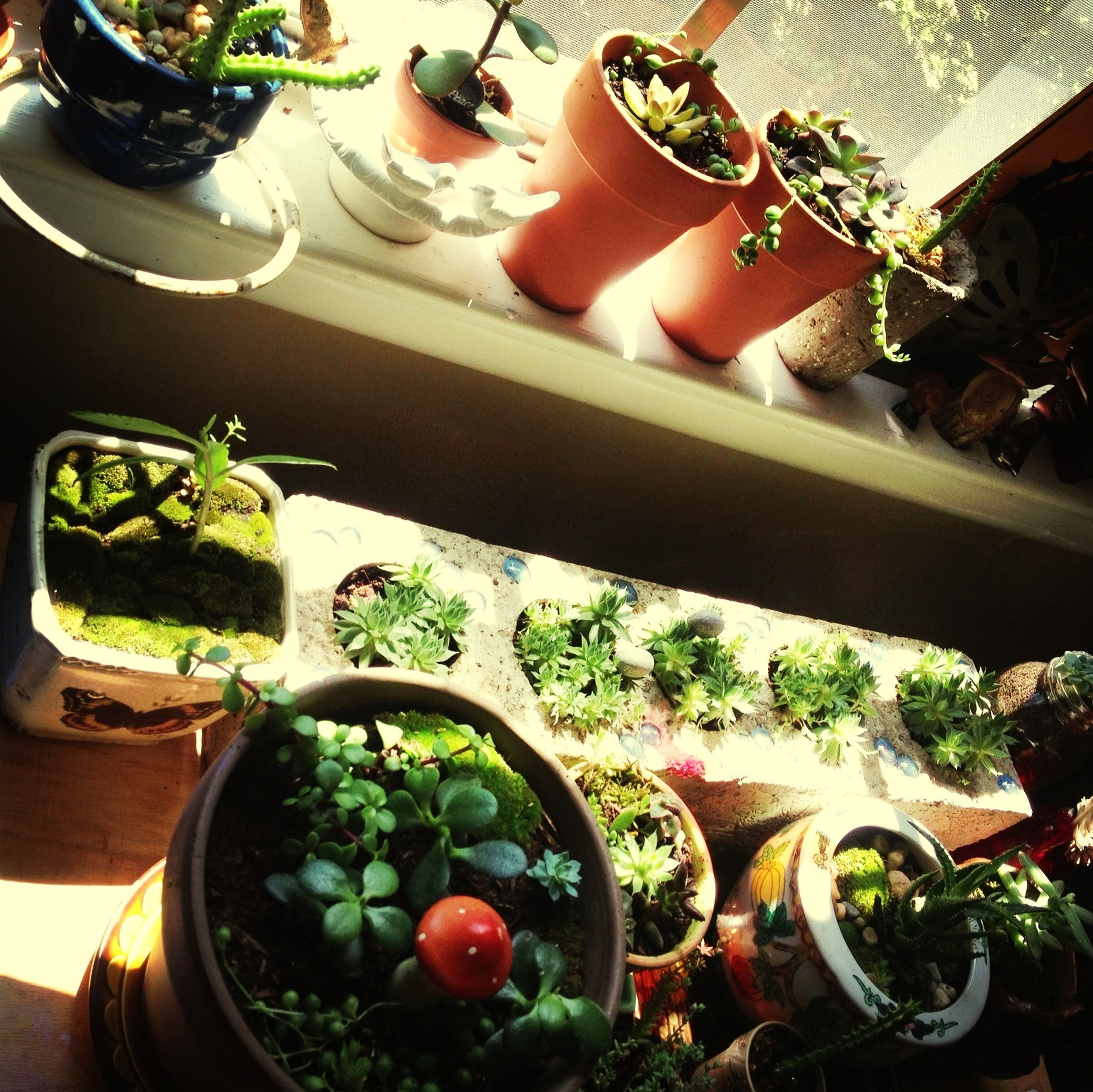 Succulent & Moss Babies On My Window Sill Stained Glass Sunshine ☀
