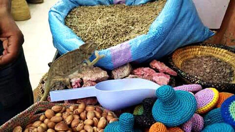 Wildlife Souks Marrakech Market