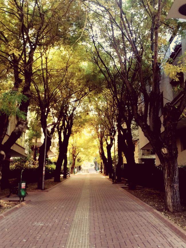 Autumn Hugging A Tree Autumn Colors Trees Ankara Ankaradayasam Mebusevleri Tandogan Autumn🍁🍁🍁 Autumn 2015 Colors Of Autumn Fall Beauty