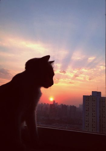 Enjoying Life Taking Photos Hello World Have Fun Living Life Check This Out Life Cat Sunset