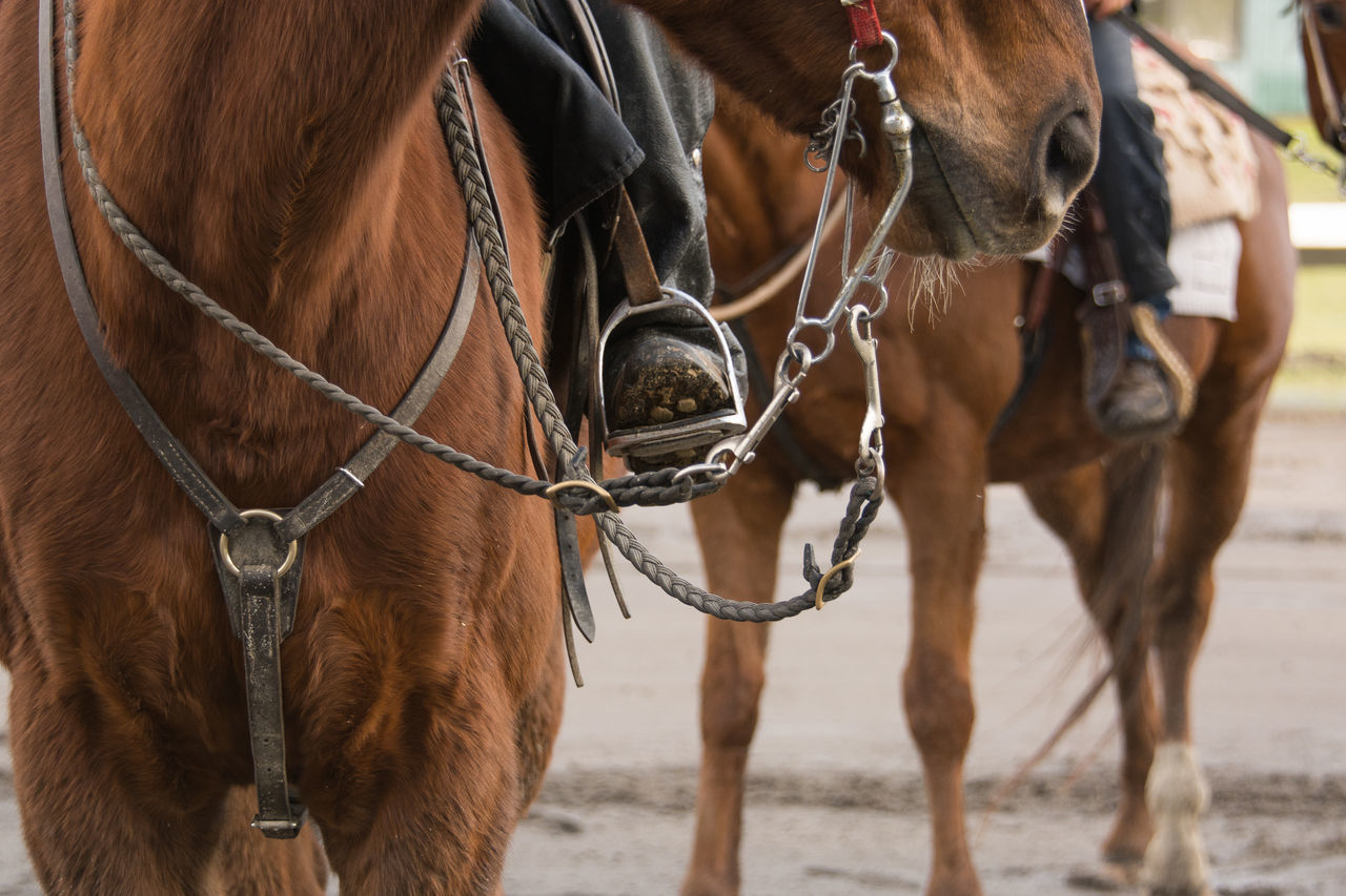 Animal Themes Bridle Brown Close-up Day Domestic Animals Horse Low Section Mammal No People Outdoors Standing Water Working Animal