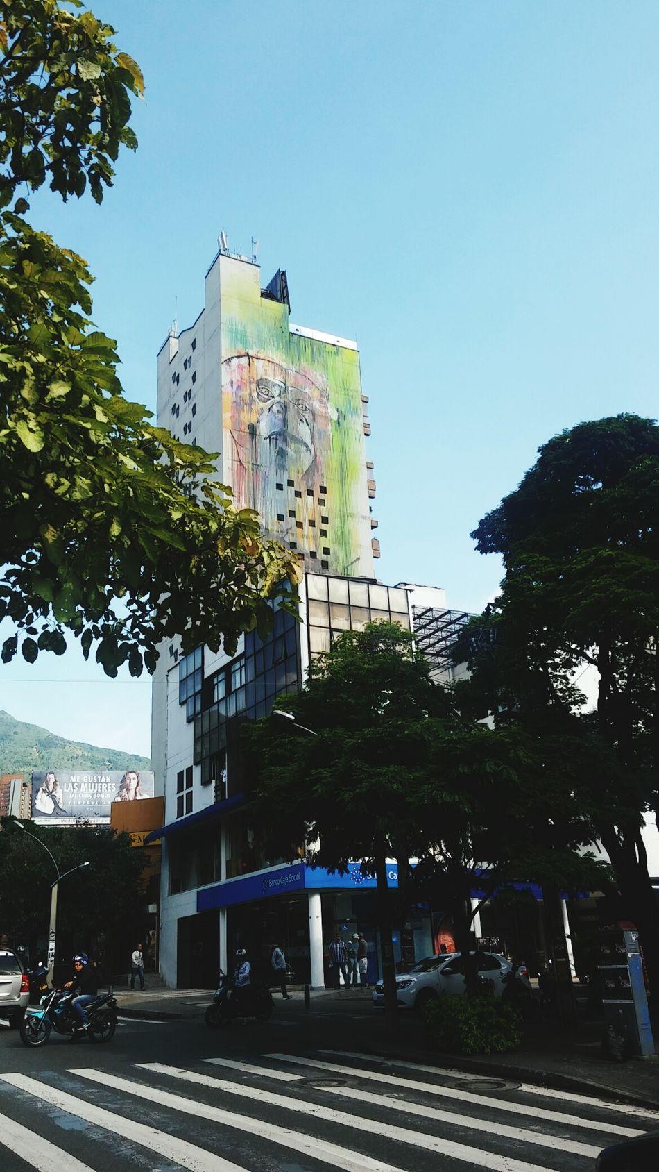 Monkey Graffiti Art... Medellin City Poblado Colombia
