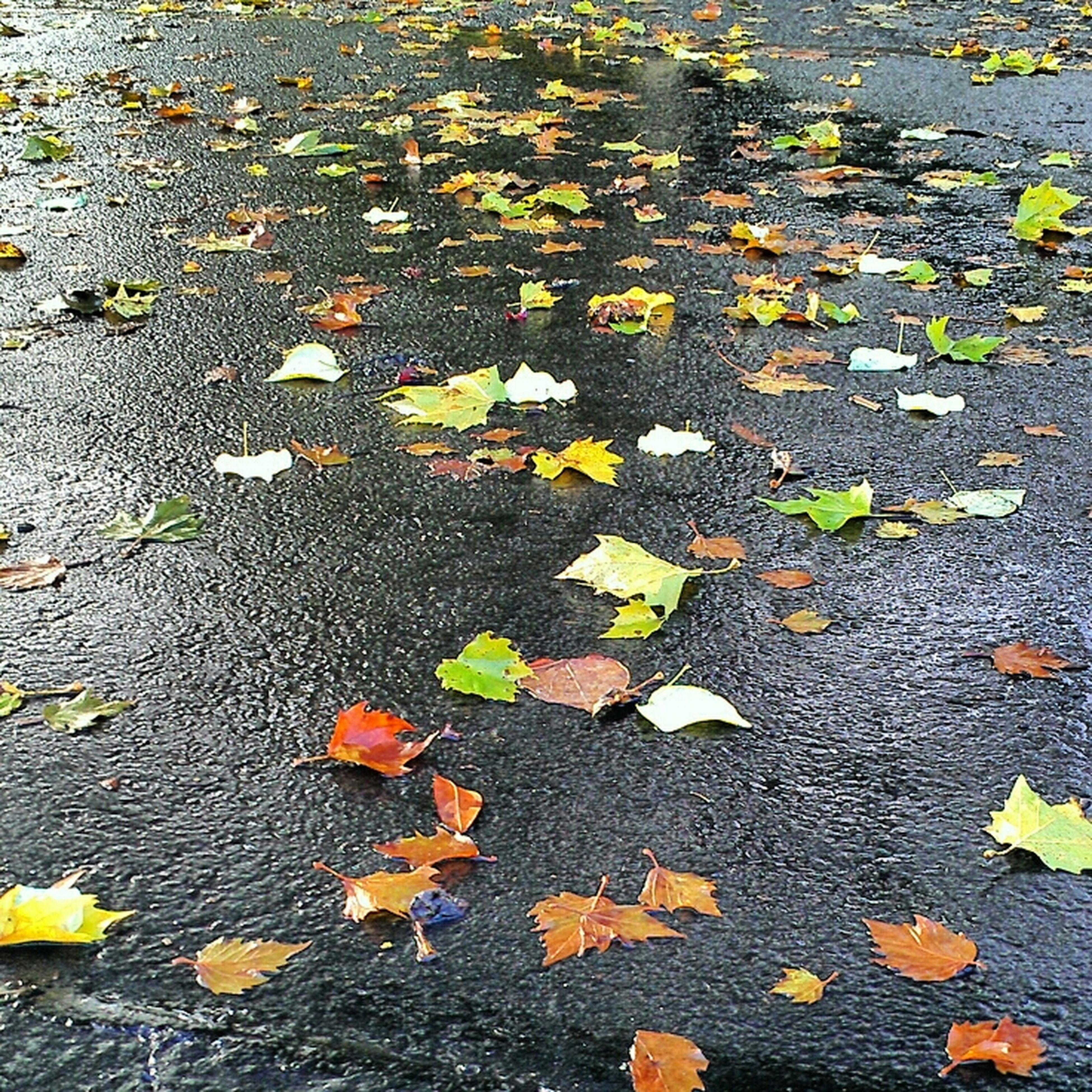 autumn, leaf, change, high angle view, season, fallen, leaves, yellow, street, asphalt, dry, road, nature, falling, day, outdoors, no people, maple leaf, transportation, ground