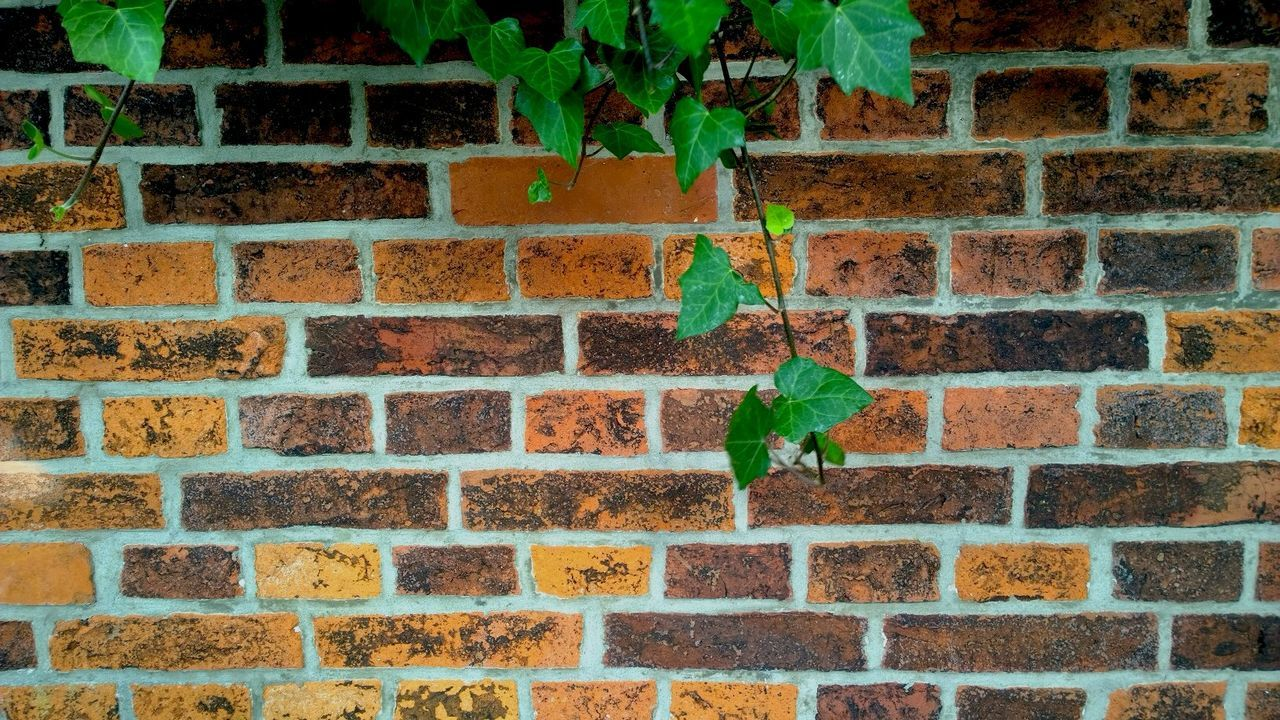 Ivy Leaves Against Brick Wall