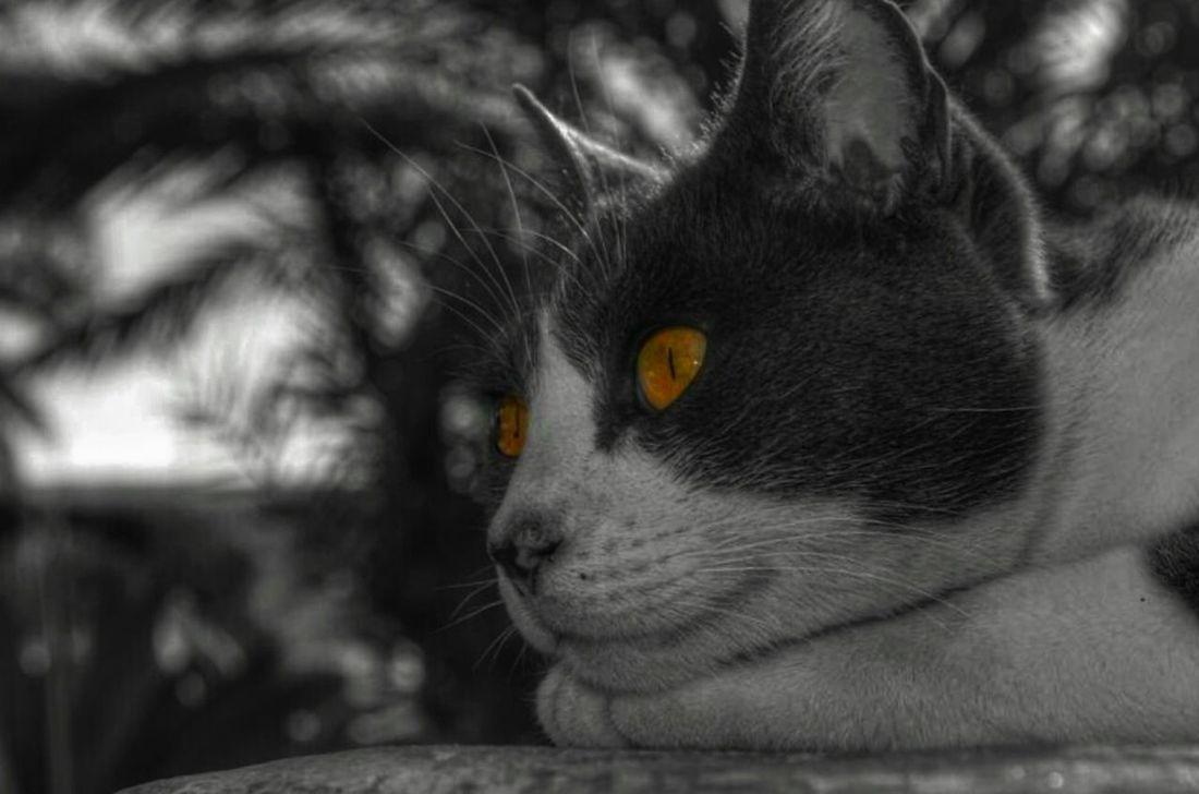 Cat_collection Color Splash Catlovers Cat Eyes Cat_nature Cats Of EyeEm Cat_fotografia Catoftheday Eyes Miradas A Otro Mundo