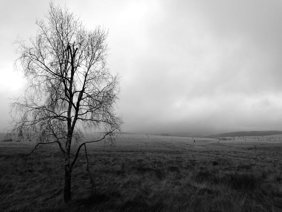 Black And White Blackandwhite No People Forest Tree Day Landscape Outdoors Nature Tranquility Beauty In Nature Sky Rural Scene Field Tree Tranquil Scene Scenics Agriculture Desaturated