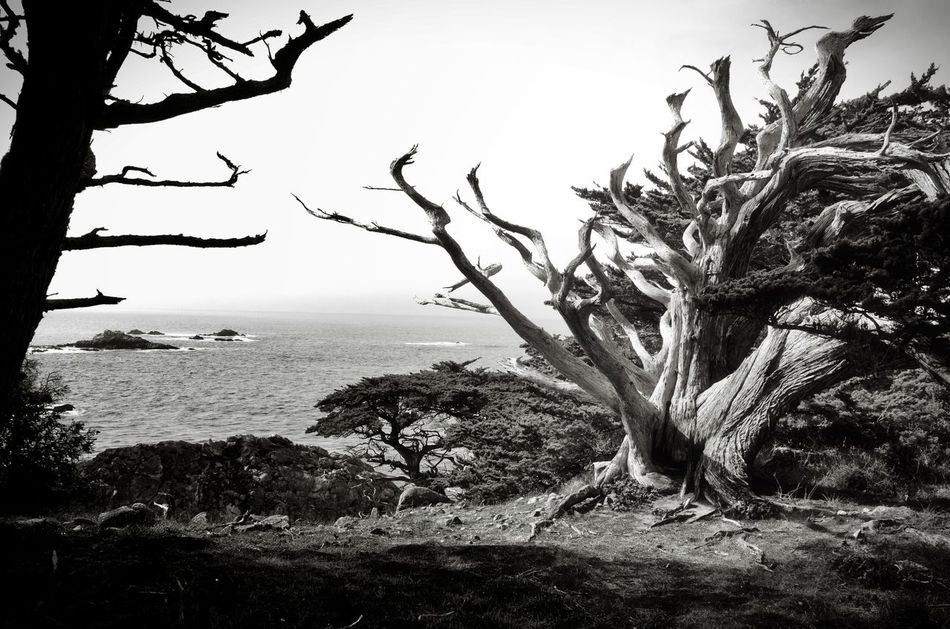 Bare Tree Beauty In Nature Black & White Black And White Blackandwhite Branch Coast Horizon Over Water Landscape Light And Shadow Monochrome Nature Nature Lover Outdoors Pacific Ocean Scenics Tranquil Scene Tranquility Tree Tree Trunk Water Windformed