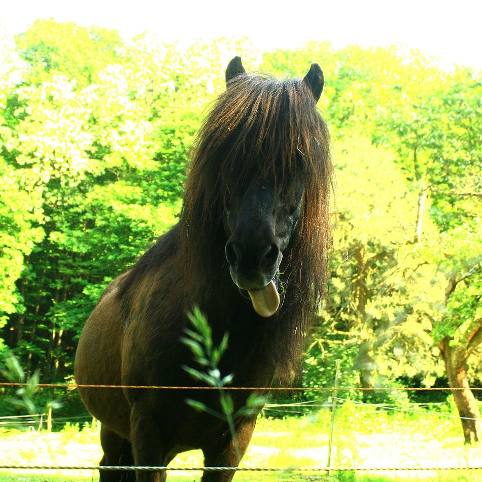 Horse Cheval Cheveaux Popular Photos Popular EyeEm Best Shots Eyem Gallery EyeEm Gallery Animal Portrait Animal Themes Animal Photography Nature_ Collection  No People One Animal Scenery Photography Selective Focus Horses Horse Love Horse Photography  Outdoors Scène De Vie Tranquil Scene