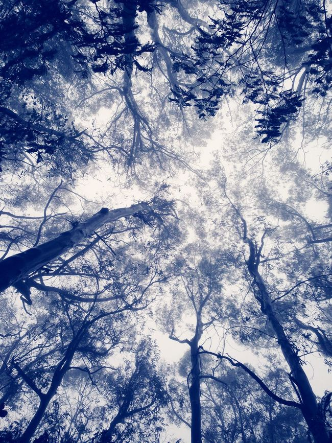 Look Up And Thrive